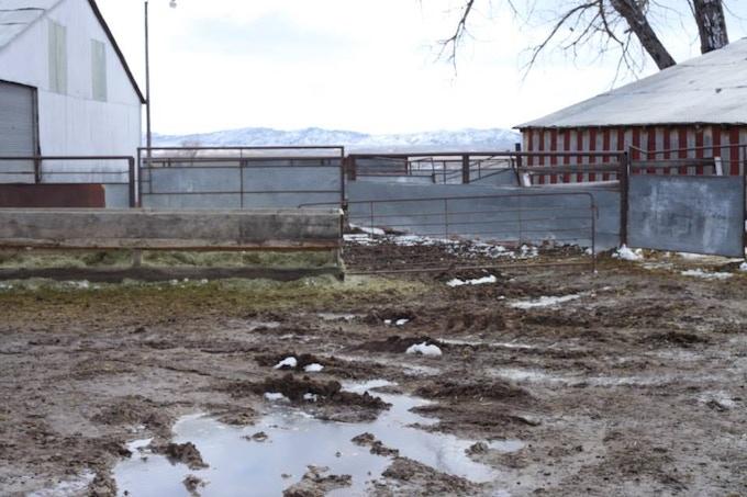 Meike Ranch during lambing season