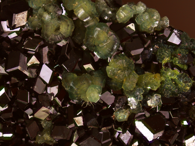 Andradite (Deep, deep red crystals) with Diopside(?) (Pale green clusters), Heinrich Estate, Concord, California. This specimen was found on a give away table at a swap meet!