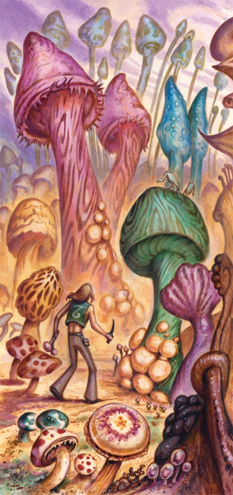 Into the mushroom forest: for survival, sustenance, and safety. But there are many species of mushroom, and not all are salubrious.