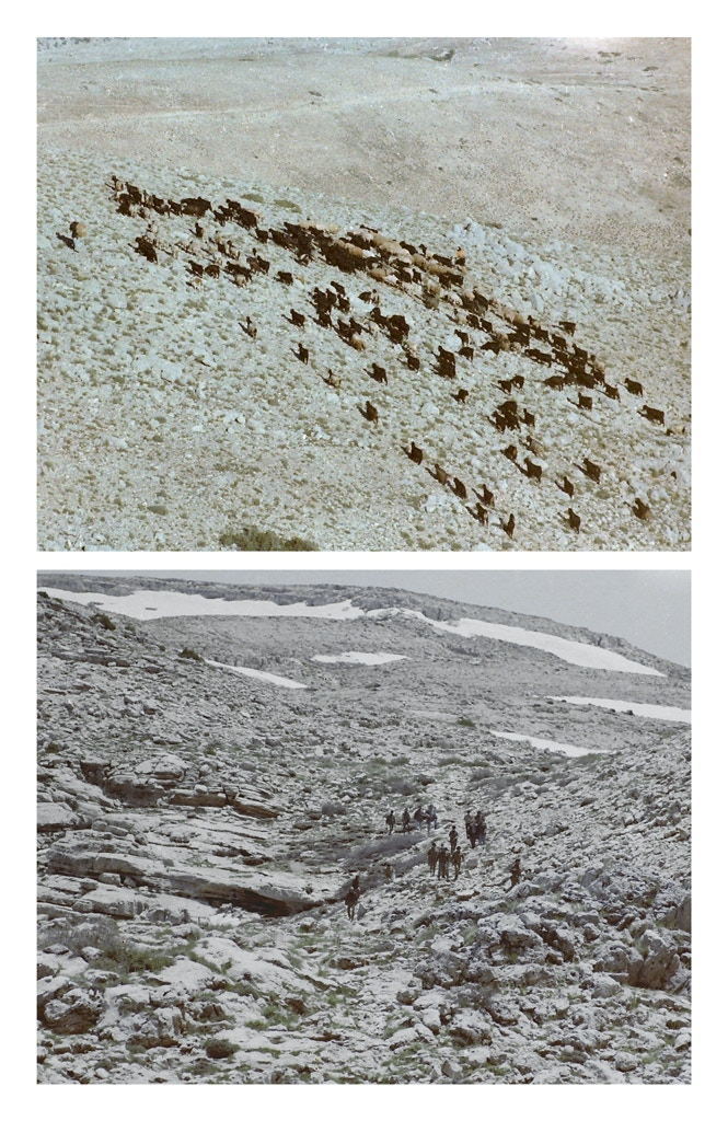 """'Untitled 4 (Goats), from the collection of Diab Alkarssifi, Lebanon 1976', Drift/Resolution series, A Lebanese Archive, Ania Dabrowska, 2014, colour photograph, Digital C-Type print, dimensions 20"""" x 16"""", unframed, limited edition of 30"""