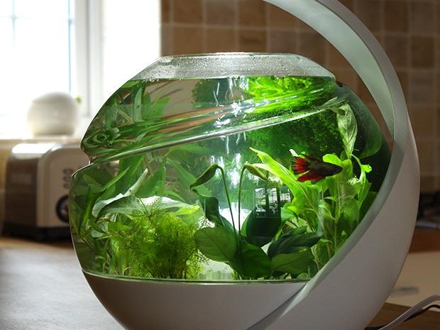 My Betta fish Cassius chilling in protoype no.3