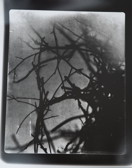 Hannah Guy. Magpie nest, Untitled 6. 11 x17 inch RC Silver Gelatin, handprinted - signed on reverse