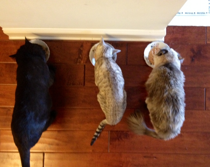 From left to right:  Meo, Cleo, & Cat#2