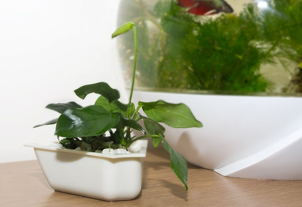 Modular potted plants are easy rearrage to create different looks