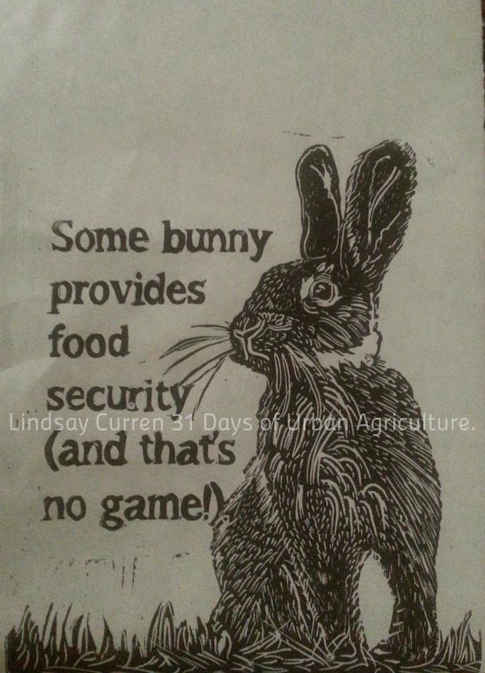 Urban rabbit keeping