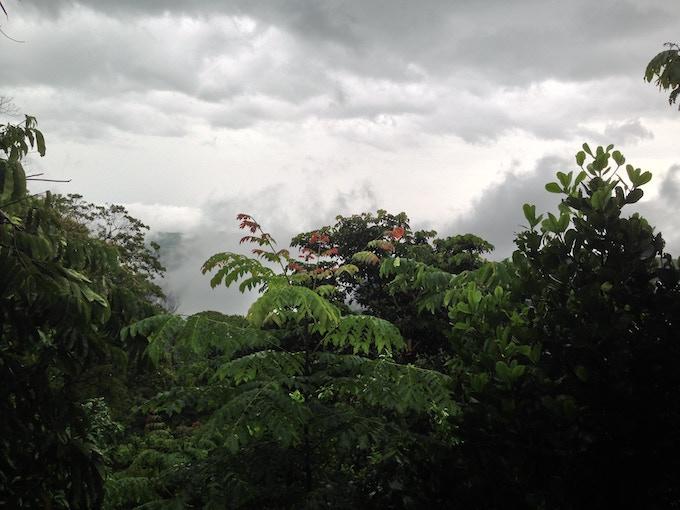 """""""The Rainforest"""" (Tarapoto, Peru: Américos' mom hometown)"""