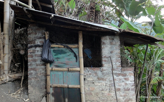 Present dilapidated building that we need to rehouse our chickens from.