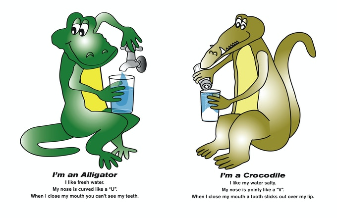 Above Image: Early Rough Draft of Alligator and Crocodile.