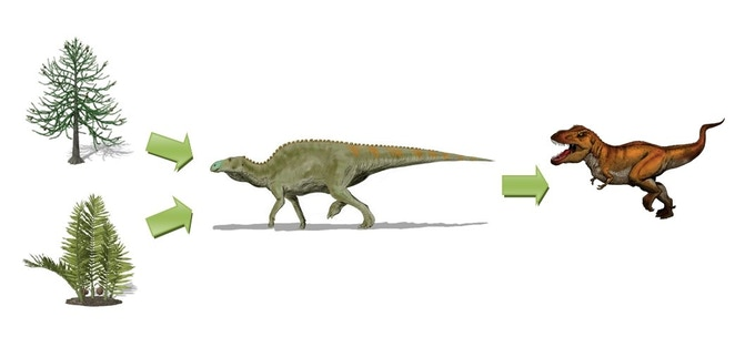 The T. rex, Edmontosaurus regalis, Nipa and Araucaria food chain. How much energy does the Edmontosaurus receive from eating one Nipa plant? How much energy does the T. rex receive from eating one Edmontosaurus?