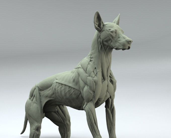 Canine Anatomy Sculpture by S  D  Lord — Kickstarter