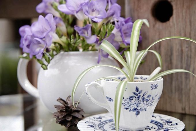Make teacup planters