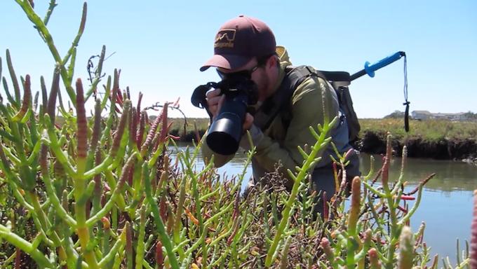 Nature and wildlife photography at the beautiful Carpinteria Salt Marsh, CA