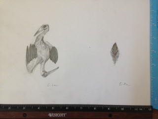 Pelican and Diamond Feather with Ruler