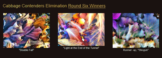 Round Six Cabbage Elimination Winners