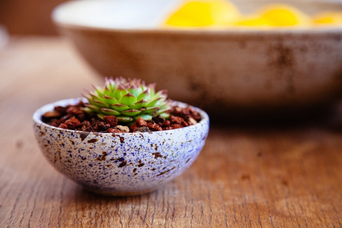 Succulent Pot: $40 Reward Level