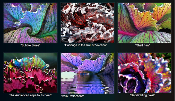 These top 6 Finished Cabbage Artworks will be the Set of Note Cards Reward