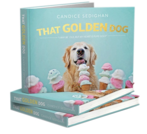 That golden dog the book plush by candice sedighan for Inspirational coffee table books