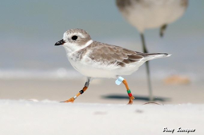 Great Plains Bird Banded in Nebraska