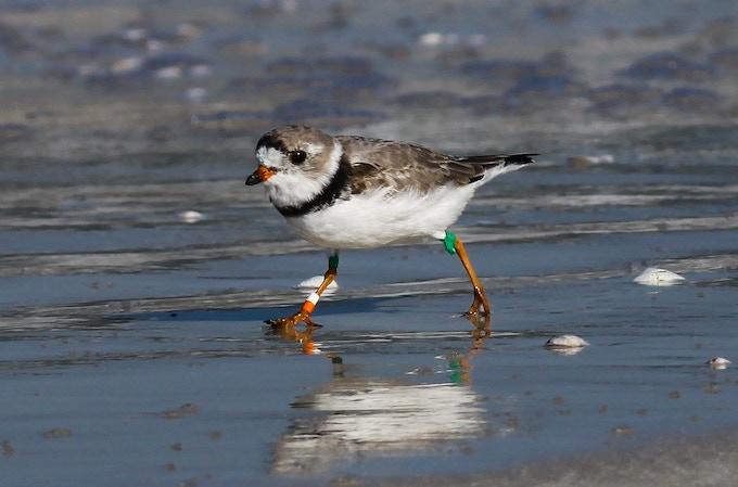 Great Plains Bird Banded in South Dakota