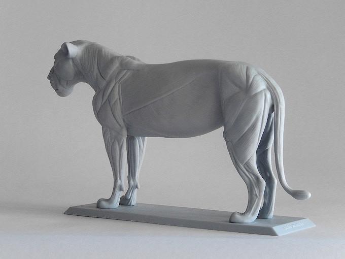 Big Cat Anatomy Sculpture Lioness By Gabriele Pennacchioli