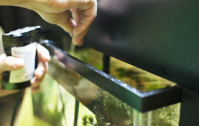 "Feed your fish through the 2"" gap in the back or easily slide the Garden back."