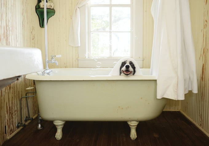Print - Jazzy in a tub