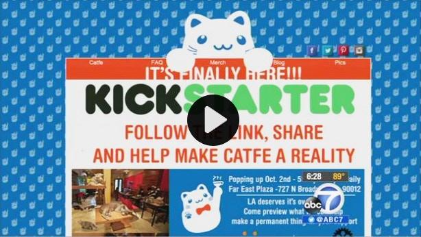Proof that LA wants its own cat cafe!