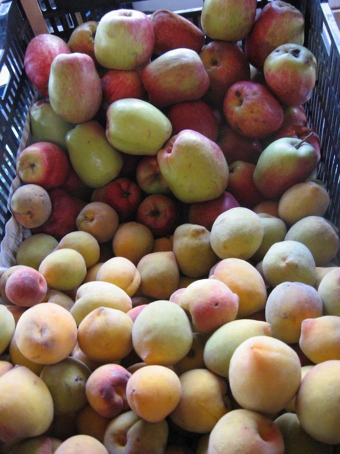 fruit production hydroponics