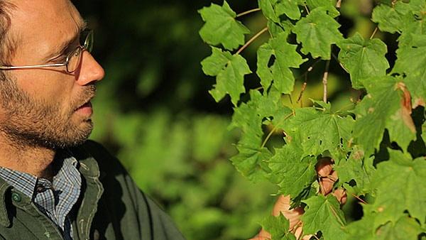 Mark Krawczyk teaching the basics of woody plant identification.