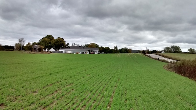 Our barley field 23 days later
