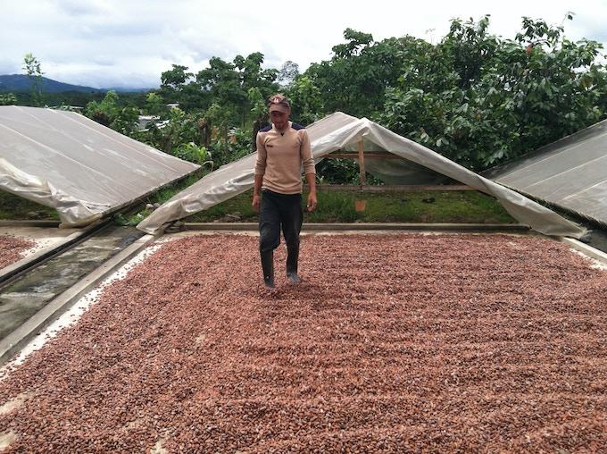 Cacao drying in the Ecuadorian sun.