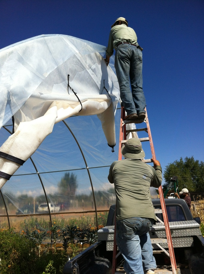 Putting the plastic on the greenhouse