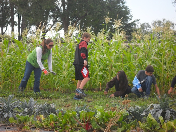 Local school group weeding after a farm tour