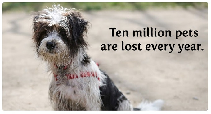 We never expect it to be our pets that go missing, until they do.