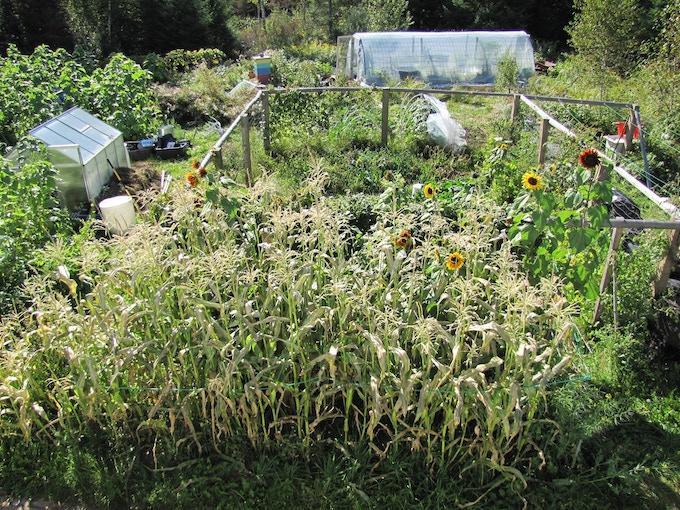 Gravel to garden in a few seasons.