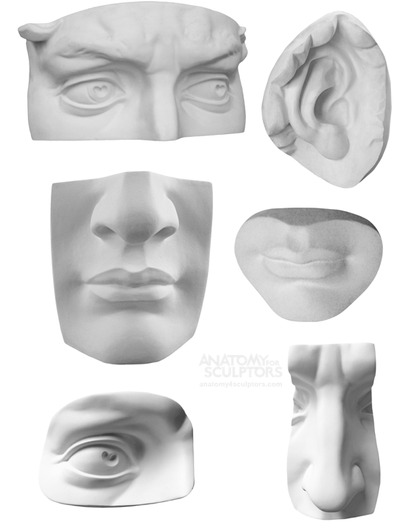 Life size facial features of Michelangelo's David in plaster