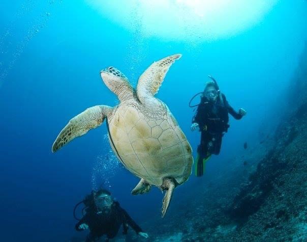 Jaz scuba diving in Indonesia
