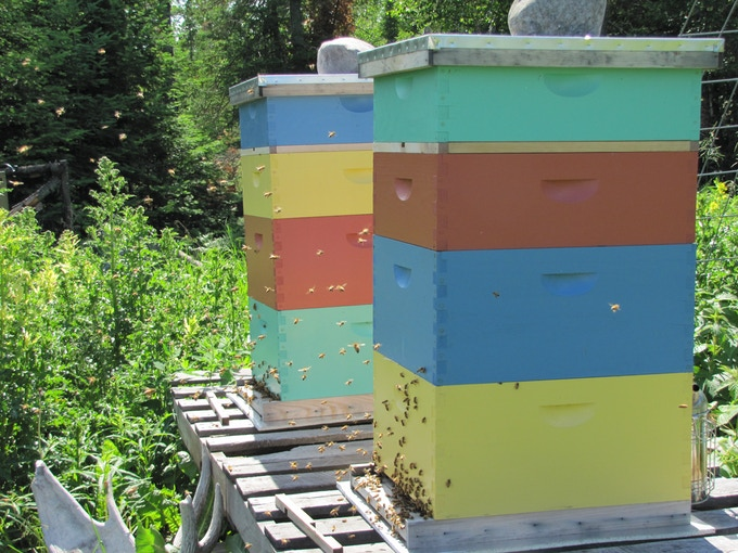 Honey bees, the pollinators of most of the food you eat!