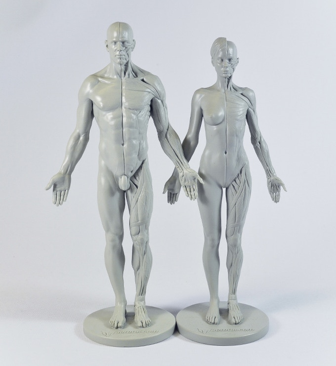 Our existing male and female anatomical reference figures, funded through Kickstarter in 2013 (male) and 2014 (female)