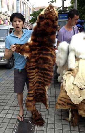 Merchant selling tiger skin in the black market, Southern China. No not the Asian holding up the fur (that's me), but the one behind