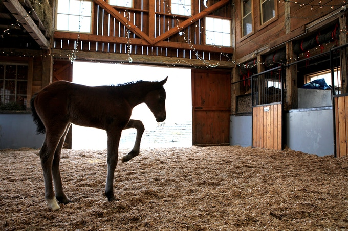 In the foal barn at Last Chance Corral, Athens, Ohio.