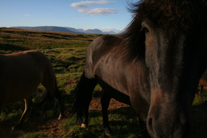 HORSES portfolio. A sweet reward!