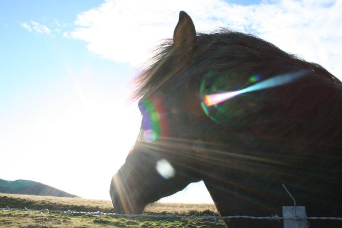 HORSES portfolio. A sweet reward.