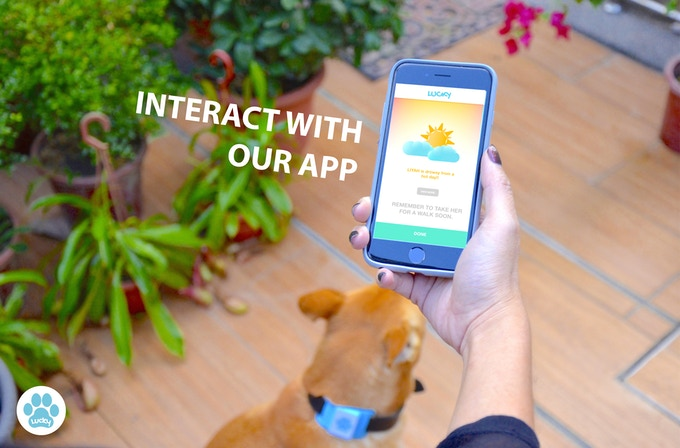 Stay Connected With The App