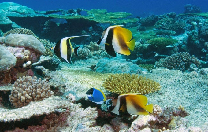Banner moorish idols in the British Indian Ocean Territory
