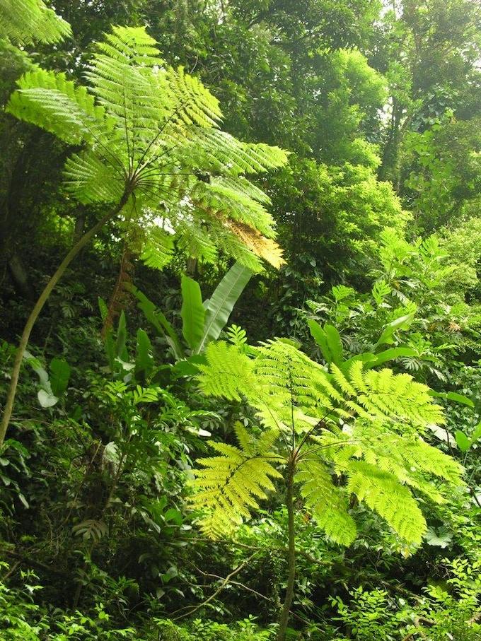 Rainforest on Montserrat