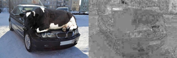 Artifact Analysis on Altered Image (note the inconsistent artifact texture on cow)