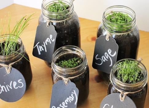 Mason Jar Garden Planters