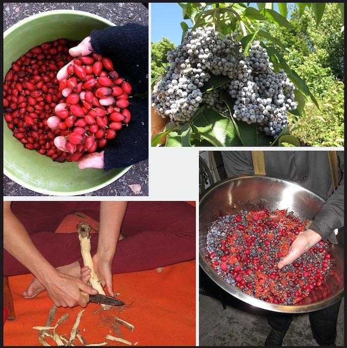 Cascadian Wine: Wildharvested Abundance of the Pacific Northwest