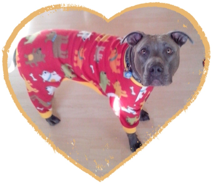 """Thor !! The """"CED"""" (Chief Executive Dog) and in the 1st pair of pajamas"""